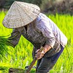 Video de viaje: el norte de Vietnam